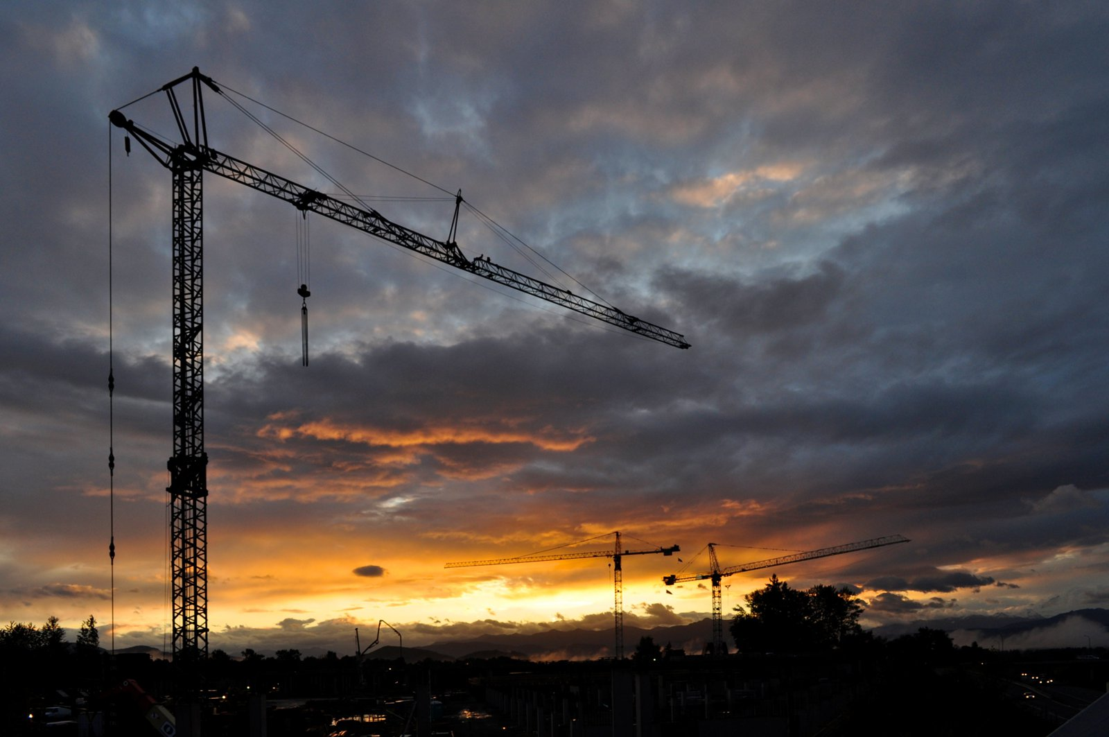 Cranes-at-Dawn-Picture